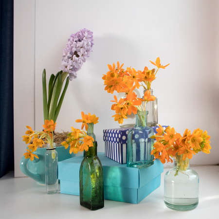 Pale hyacint in blue cup and Blooming yellow Ornithogalum Dubium in a transparent bottle instead vase