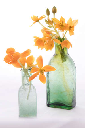 Blooming yellow Ornithogalum Dubium in a transparent bottle instead vase