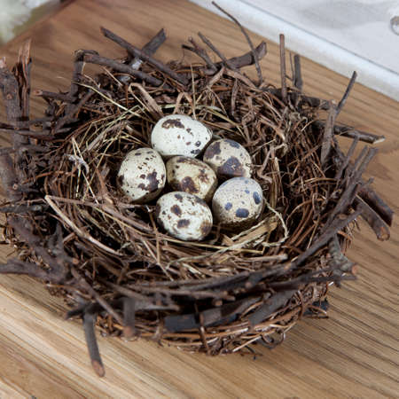 Group of quail spotted eggs in the grassy nest isolated on white Stock Photo