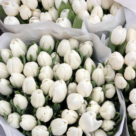 White tulips wrapped in kraft paper on the market for sale Stock Photo
