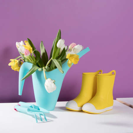 Yellow rubber boots with a bouquet of flowers of yellow daffodils and white and pink tulips on white wooden table on the violet background. Garden accessories.