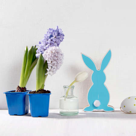 Pots with hyacinths on a white background. Easter card.