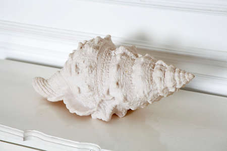 the White shell on a white chest as a decoration
