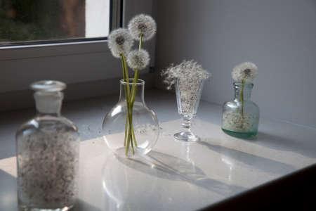 Dientes de león en un jarrón transparente contra el sol
