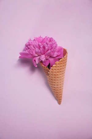 waffle cone with a big pink peony on a pink background. Creative design for pastel wallpaper.