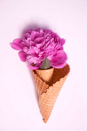 waffle cone with a big pink peony on a blue background. Creative design for pastel wallpaper. Фото со стока