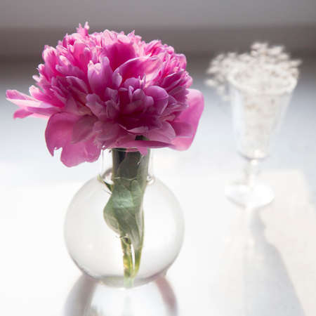 the Pink peony in a transparent vase on a white background