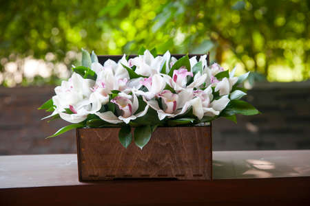 White orchids in a gift box on the terrace as a wedding gift