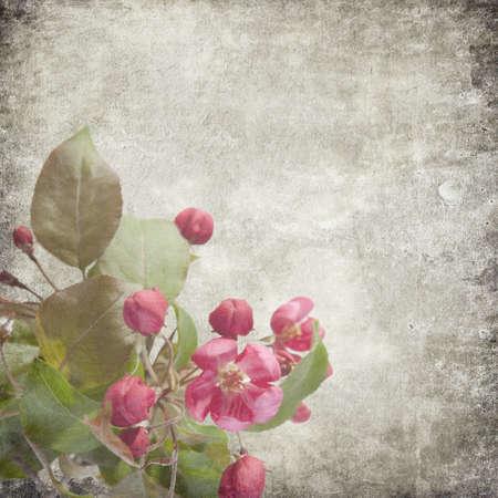 Flowers of an apple-tree of Nedzvetsky (Malus niedzwetzkyana Dieck) in the cap