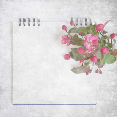 sketchpad with flowers of an apple-tree of Nedzvetsky (Malus niedzwetzkyana Dieck) isolated on white background