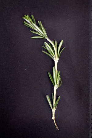 Rosemary branch on a black paper background. Card