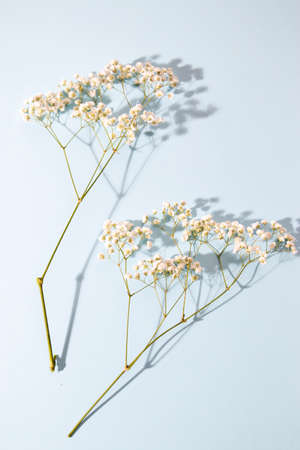 Gypsophila branch on a blue background as a beautiful card