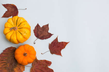 Orange pumpkins and leaves, top view on the blue background , web banner with copy space 写真素材