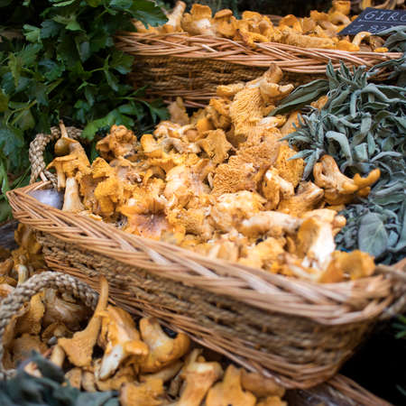 Sale of various types of mushrooms in birch bark boxes at the farmers market. Including chanterelles.