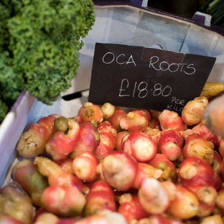 The oca root for sale at the farmer market