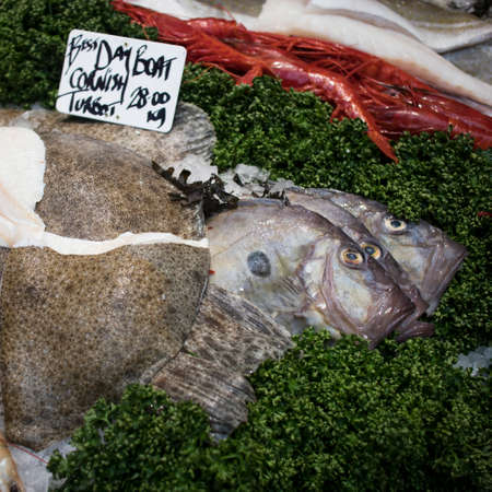 Various types of seafood for sale in the local market. The day boat cornish turbot is a fast growing and powerful flatfish. Reklamní fotografie