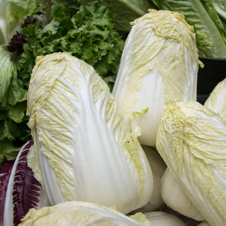 fresh chinese cabbage or napa cabbage in the farmer market