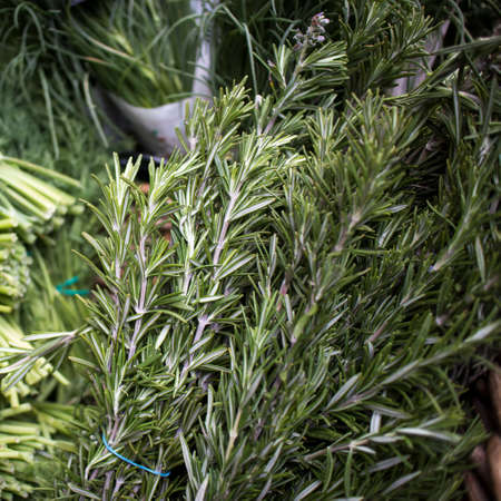 Fresh bunches of rosemary on a counter for sale at a farmers market. Squere frame