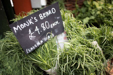 Monks Beard is a relatively unknown green. Thought to have originated from the Cappuccino Monks in Tuscany this vegetable has become popular with chefs cooking seasonal menus.