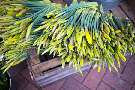 Unraveled daffodils in a box for sale at a farmers market