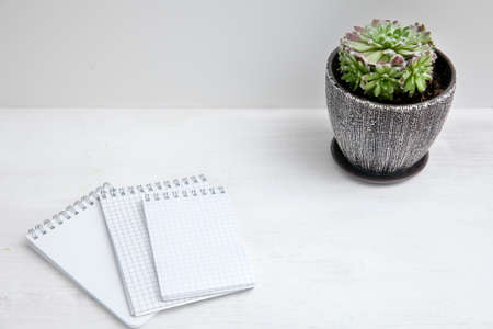 Succulent in a ceramic pot and notebooks on a white table. Space for text