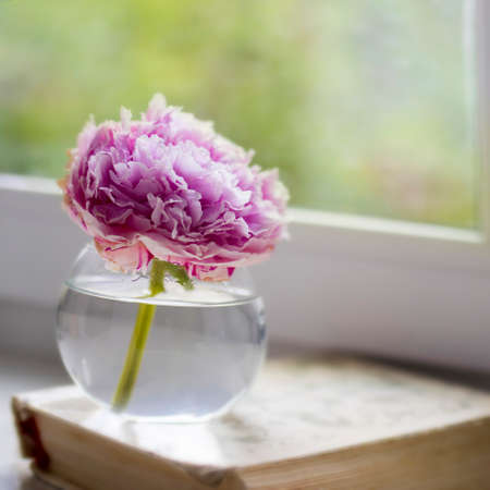 One pink peony on a book on a windowsill against a background of greenery in a window. Space for text
