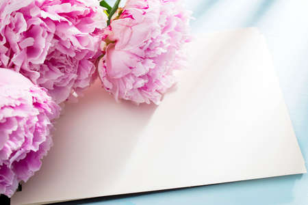 Three fresh blossoming pink peonies lie on a white open notebook. Space for text. To do list. Educational concept