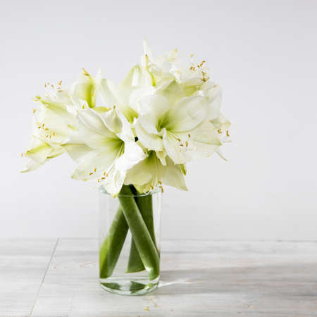 Bouquet of white lilies in a tall glass vase on a beige table against a gray wall. Copy space. Fresh bud
