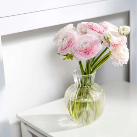 the Bouquet of pale pink Persian buttercups isolated on pale gray. Copy space