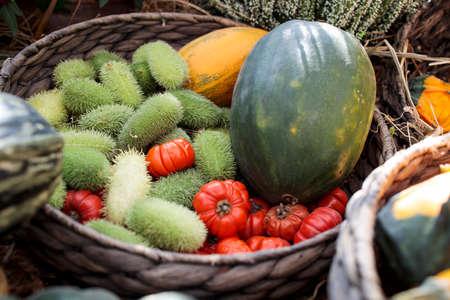 Squirting cucumber in a wicker basket decorate a windowsill