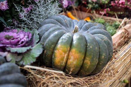 Ornamental purple brassica cabbage and large green pumpkin adorn the farm stall Standard-Bild