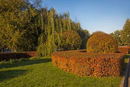 Red-yellow trimmed barberry bushes, weeping willow, lawn in autumn in good weather. The sun. Selective Sharpness