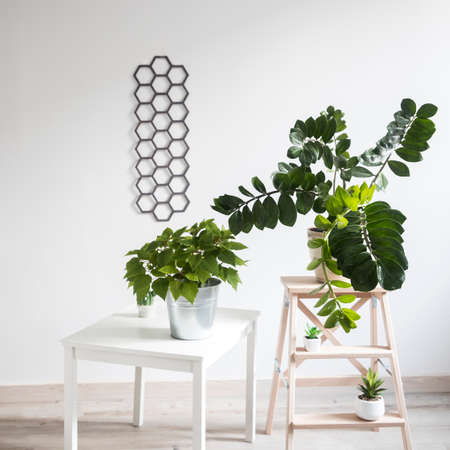Zamioculcas plant in clay pot and Poinsettia on the stool in white modern interior. decorative diamond-shaped panel on the wall. Scandinavian style
