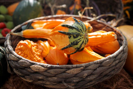 various kinds of small decorative pumpkins in a wicker basket as a decoration of garden Фото со стока