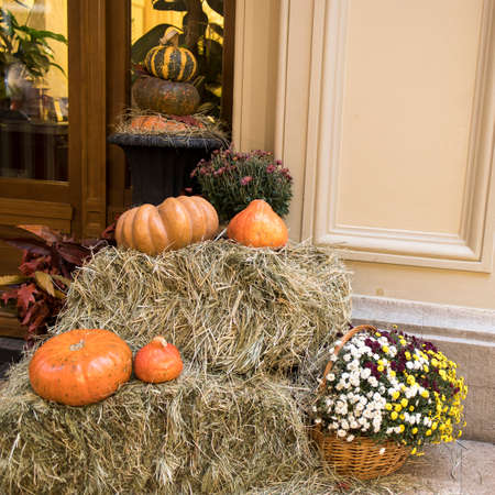 Colorful chrysanthemums in a wicker basket, pumpkins - Halloween decorations. Фото со стока