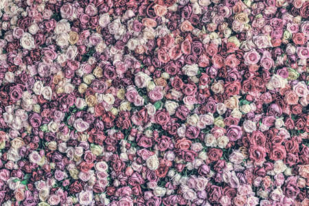 Desaturated rose wall background with more detail