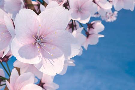Macro 3D Illustration of a Cherry Blossom Flower