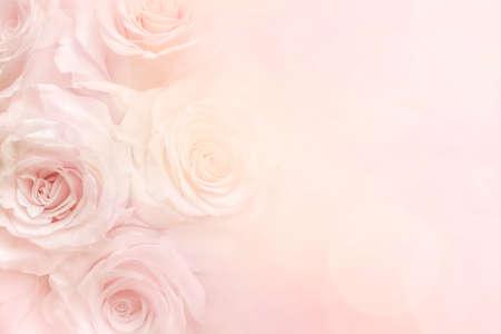 Rosen auf einem hellgelben und rosa pastellfarbenen Hintergrund