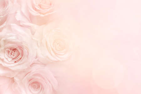 Roses on a pale yellow and pink pastel background