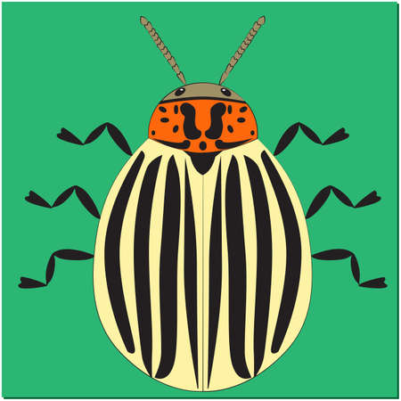 Animated insect Colorado potato beetle on green background