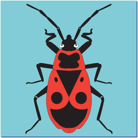 insect bug soldier on blue background