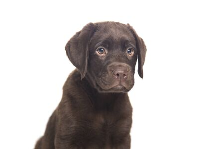 portrait of a puppy dog isolated on white background with sympathetic muzzle and intelligent expression