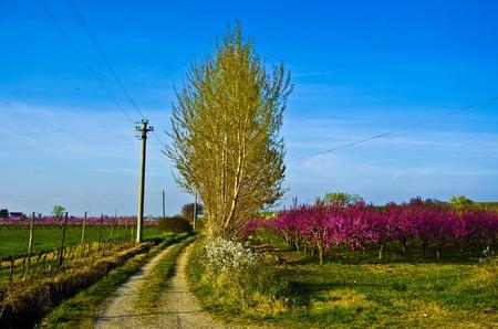 albero: strada in primavera Stock Photo