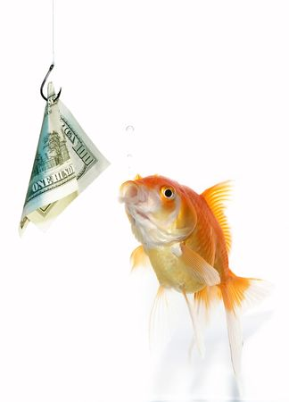 Goldfish hunting for  banknote photo