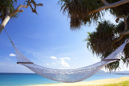 view of nice white  hammock hanging between two palms photo