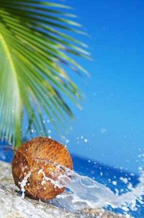 splutter: view of coconut getting cracked against shore boulder
