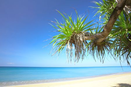 furlough: View of nice empty sandy beach with fragment of a  mangrove tree
