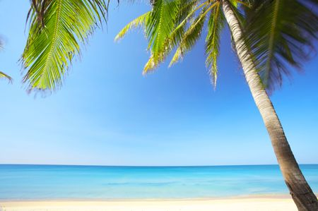 View of nice tropical empty sandy beach with some palms