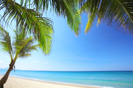 cerulean: View of nice tropical empty sandy beach with some palms