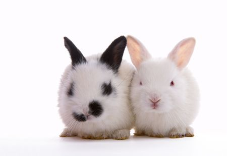 furskin: view of  nice lonely  little  rabbits on white back Stock Photo